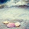 Аватар К ракушкам приближается волна