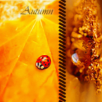 Аватар Бабка-коробка на желтом листе (Autumn)