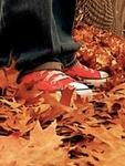 Аватар В кедах на осенних листьях