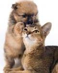 Аватар Милый щенок кусает кота за ухо