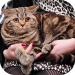 Аватар Кот на руках у хозяйки