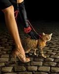 Аватар Девушка в черных перчатках ведет на поводке кота