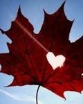 Аватар Красный кленовый лист на фоне неба, с вырезанным в нем сердцем