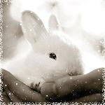 Аватар Маленький белый кролик в человеческой руке