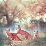 Аватар Три лисенка играются в осеннем лесу (осень)