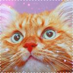 Аватар Морда рыжего кота