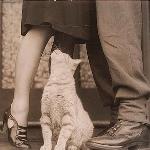 Аватар Кошка смотрит снизу вверх на девушку