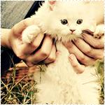 Аватар Кошка в ласковых руках