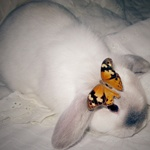 Аватар Кролик с бабочкой на ушке