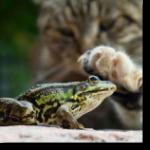 Аватар Кот трогает лапой лягушку
