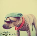 Аватар Гламурный пёс