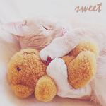 Аватар Котенок обнимает плюшевого медвежонка во сне (Sweet)