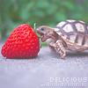 Аватар Черепашка кусает клубнику (Delicious)