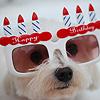 Аватар Собачка в забавных белых очках в форме тортиков со свечками, на которых написано Happy Birthday / С днем рождения
