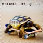 Аватар Черепашка на скейте (Медленно, но верно..)
