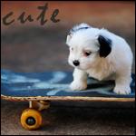 Аватар Щенок на скейте (Cute)