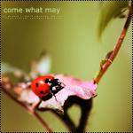 Аватар Божья коровка на листике (Come what may / Будь что будет)
