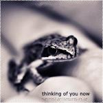 Аватар Маленькая лягушка на руке человека (Thinking of you now / Думаю о тебе сейчас)