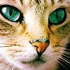 Аватар Пронзительный взгляд кошачьих глаз
