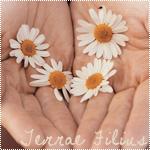 Аватар Цветы ромашки в руках (Terrae Filius / Дитя природы)