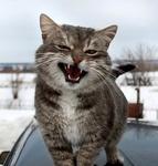 Аватар Четкий кот на лобовом стекле авто