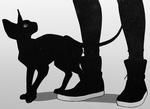 Аватар Человеческие ноги и кошка породы канадский сфинкс