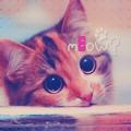 Аватар Кошка внимательно смотрит (Meow / Мяу?)