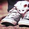 Аватар Белый котенок сидит между кедами у парня