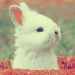 Аватар Белый кролик