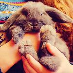 Аватар Серый кролик на руках у девушки