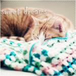 Аватар Спящая кошка (Sweet dreams / Сладкие сны)
