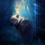 Аватар Белый волк в ночном лесу