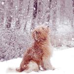 Аватар Собака сидит и смотрит на снег