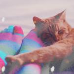 Аватар Рыжий кот спит у ног в полосатых носках