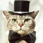 Аватар Гламурный кот, на голове черная шляпа, на шее бабочка