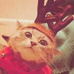 Аватар Удивленный кот в праздничном костюме с рогами оленя
