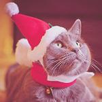 99px.ru аватар Серый кот в новогодней шапочке