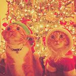 Аватар Два кота в новогодних костюмах на фоне праздничной елки
