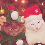 Аватар Белый и серый коты в новогодних костюмах