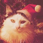 Аватар Кошка в новогодней шапке