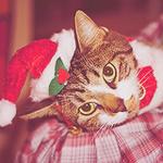 Аватар Кот лежит в новогодней шапке