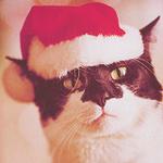 Аватар Кот в новогодней шапке