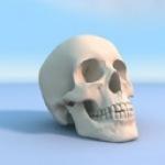 Аватар Человеческий череп стоит на голубой поверхности