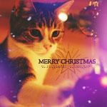 Аватар Кот трогает лапкой елочный шарик (Merry Christmas / С Рождством)