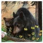 Аватар Пара черных медведей в окружении ромашек