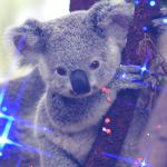 Аватар Малыш-коала на ветке