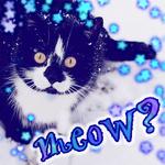 Аватар Черный кот с желтыми глазами сидит в снегу (meow?)