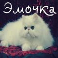 Аватар Белый персидский кот, логин Эмочка