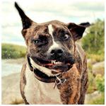 Аватар Смешная морда пса