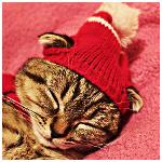 Аватар Спящий серый кот в розовой шапочке с помпоном